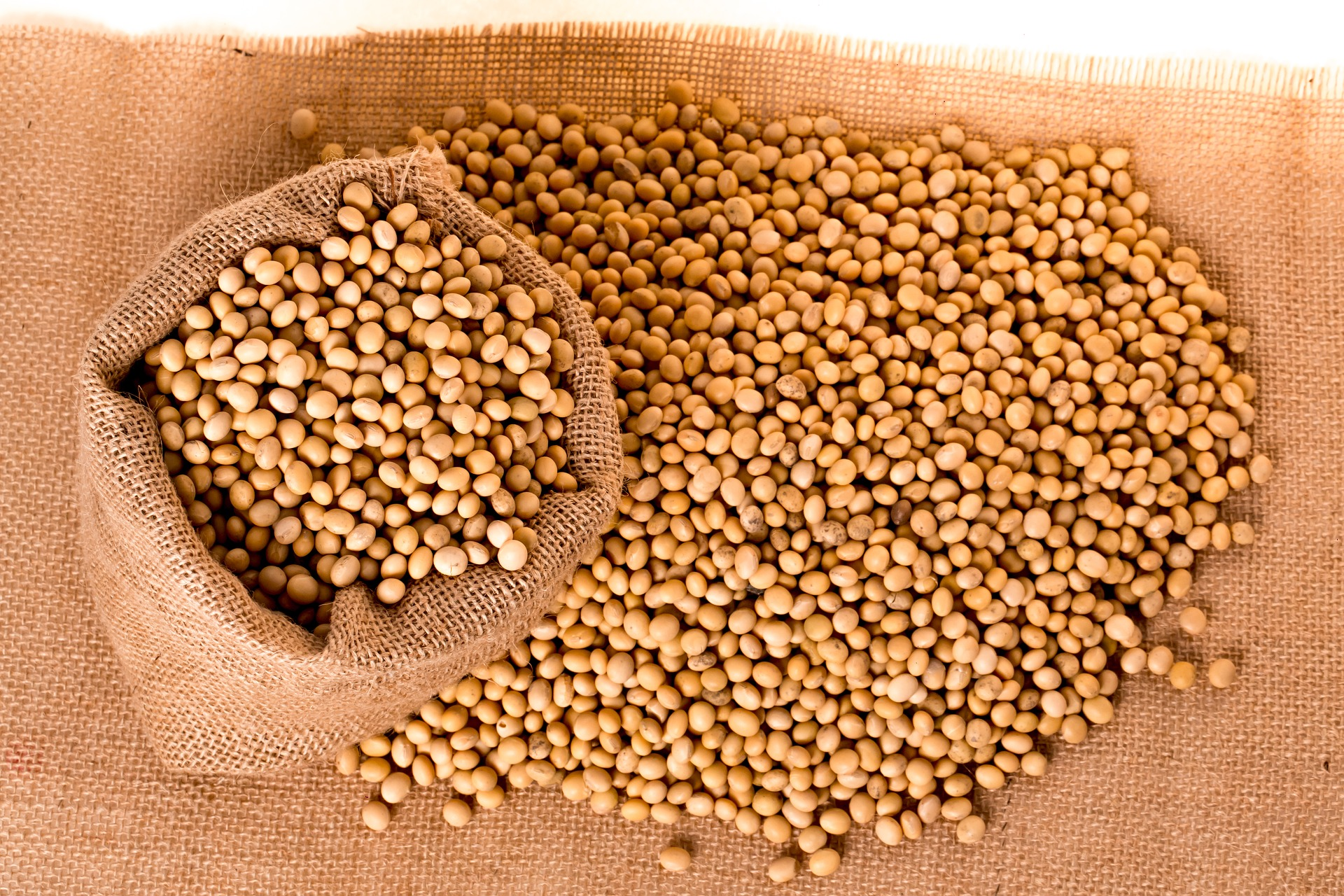 Are soybeans good for you?