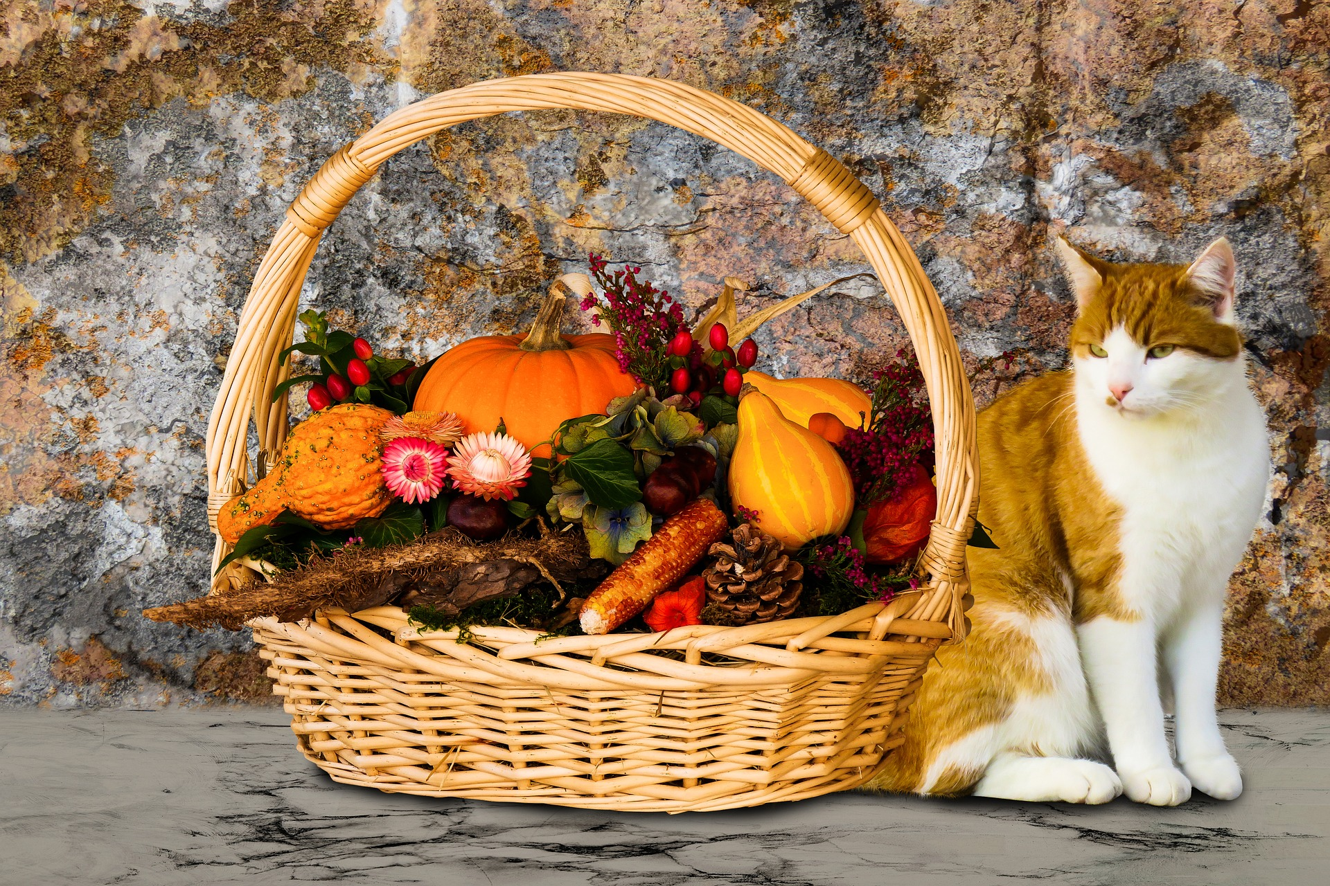 Can cats be vegan?-Shocking truth